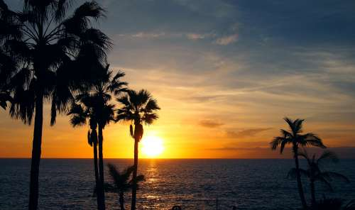 palm trees sunset evening view ocean