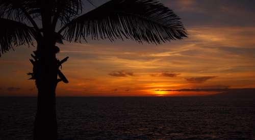 palm tree sunset view ocean ocean view