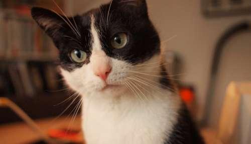 cat cute pet animal furry