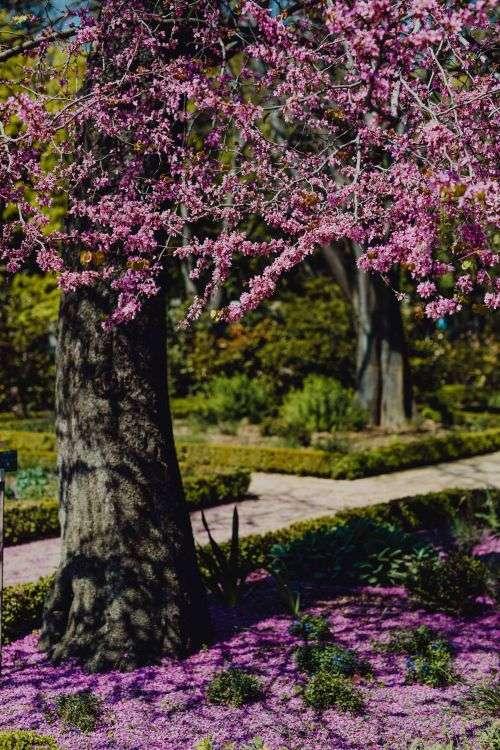 Real Jardin Botanico, Madrid, Spain