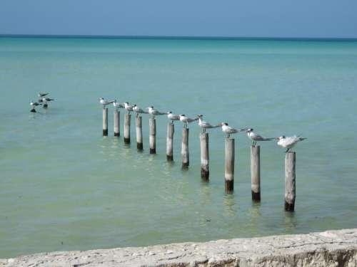 seagull bird post sea ocean
