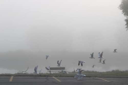 #seagulls #fog