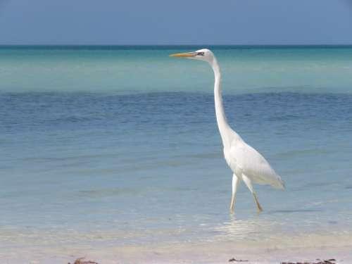 seagull bird sea ocean mexico
