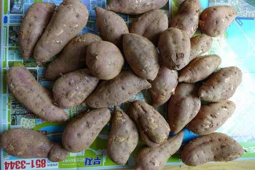 sweet potato yam produce tuber root vegetable