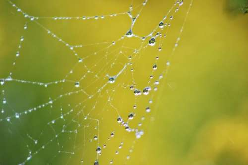 insect spider web water rain