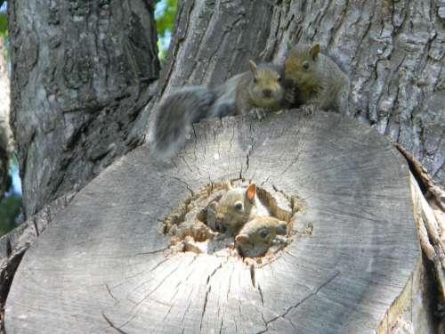 squirrel animals cute squirrels