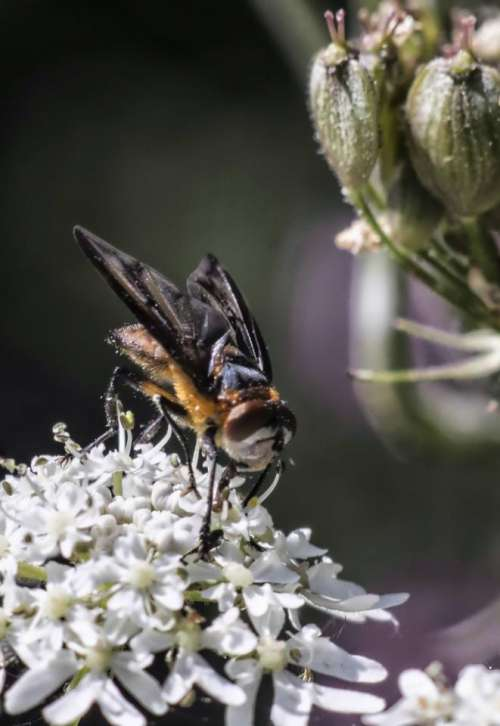 #macrophotography fly