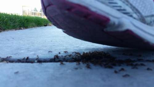 ants shoe insects