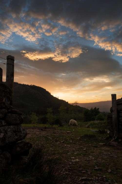 Sunset farm sheep evening clouds