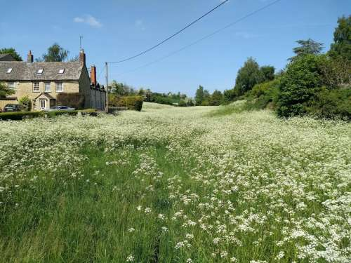 spring flowers meadow village summer