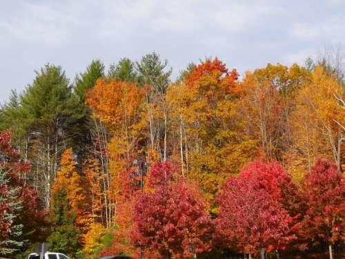 autumn fall season foliage colorful
