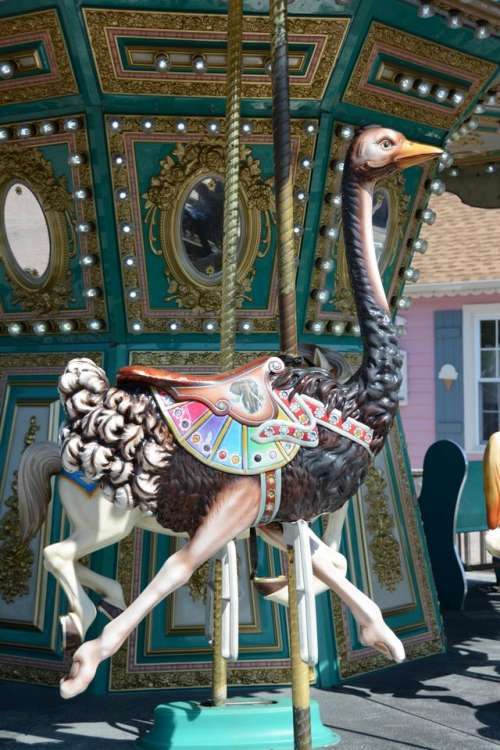 carousel merry go round ride amusement carnival