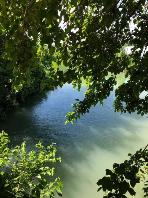 water blue tree green
