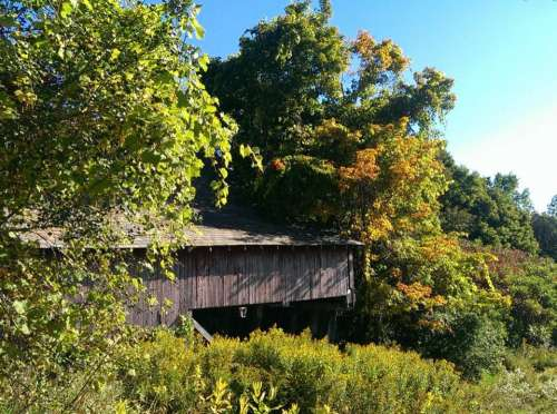 barn shed leaves autumn aging