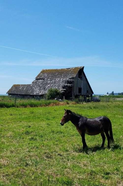 barn horse animal field nature