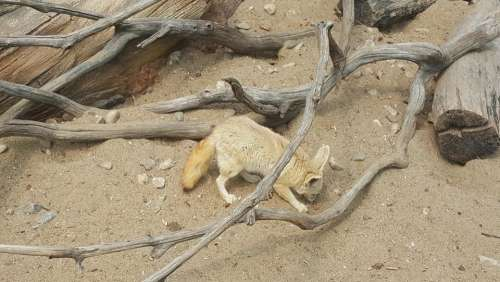 zoo Seoul animals fox canine