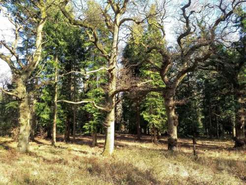 woods spring forest trees
