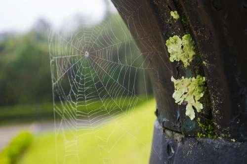 spider web webbing arachnid bug