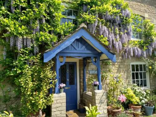 cottage wisteria english tourism spring