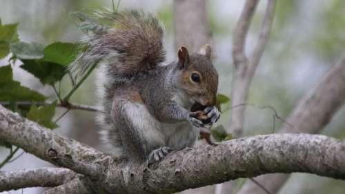 Squirrel Squirrels wildlife Squirrel eating