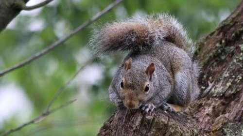 Squirrel Squirrels wildlife squirrel close up backyard wildlife