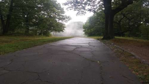 Franklin Park Fog Outdoors Tree