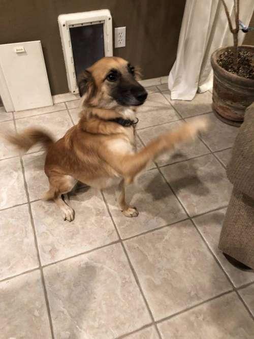 dog dog shake shakes shaking hands shake hands