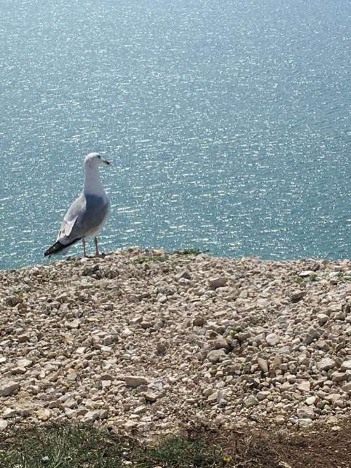 Cliffs bird seagulls sea sunshine summer nature