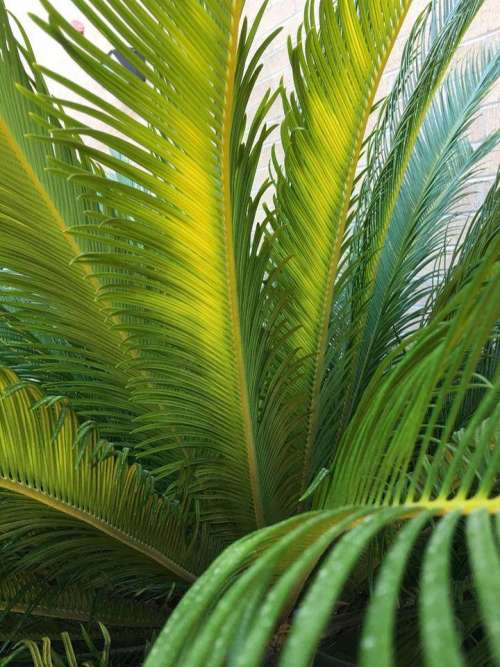 palm tree frond closeup flora