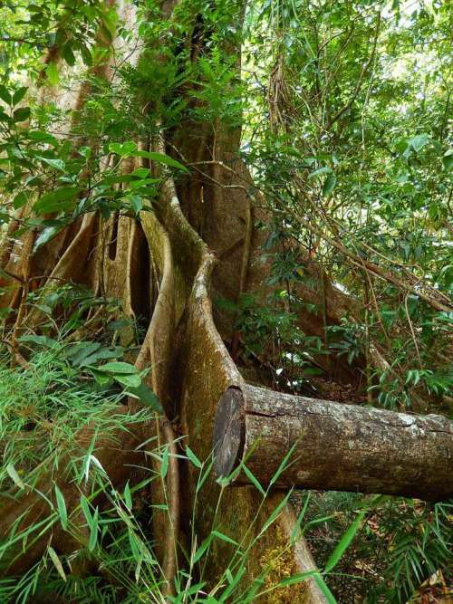 tree tree trunk tree root forest tropical