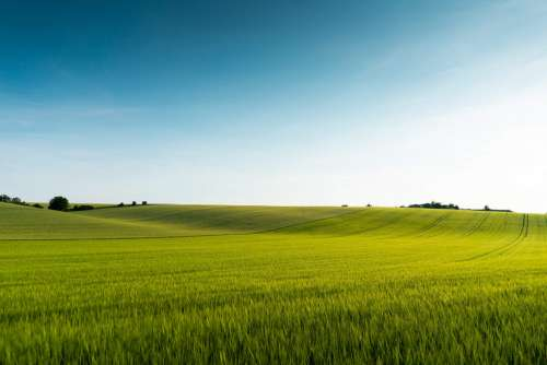 Beautiful Green Field Scenery Free Photo