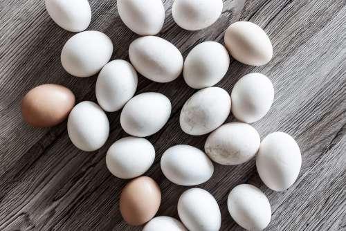 White Eggs Natural Free Photo