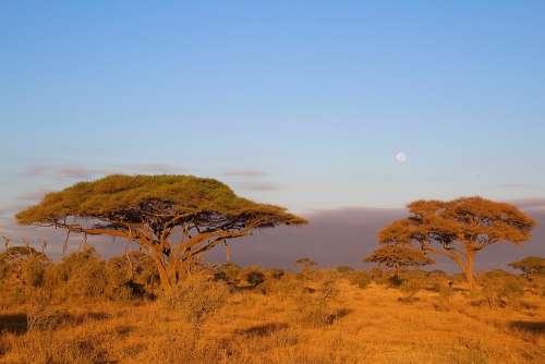 Africa Kilimanjaro Kenya Nature National Park