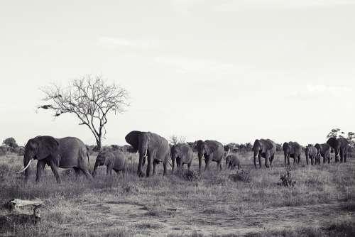 Africa Kenya Tsavo Safari Nature Animal World