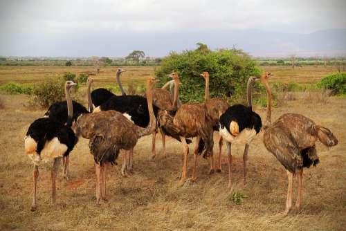 Africa Safari Tsavo Animal World Nature Wild