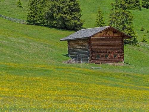 Alp Alpine Hut Flower Meadow Flowers Yellow Alm