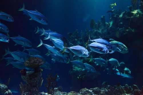 Animal Aquarium Aquatic Blue Coral Dark Deep