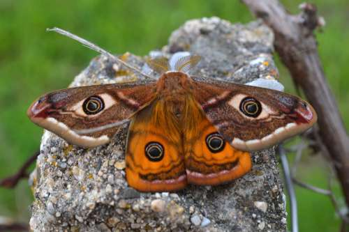 Animal Beauty Butterfly Close Colorful Cute