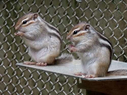 Animal Squirrel Chipmunk Cute Diet Park Travel