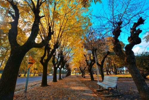 Autumn Plaza Colors Park Beautiful Leaves Path