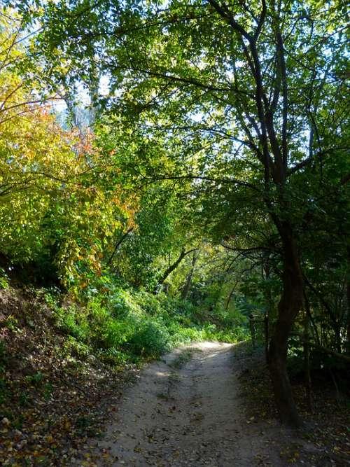 Autumn Road Trail Landscape Trees Nature Travel