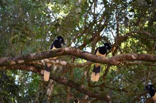 Ave Yellow Black Animals Branch Plumage