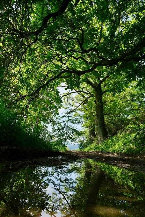 Away Puddle Promenade Green Hike Mirroring Tree