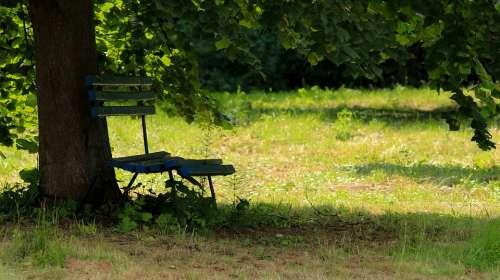 Bank Tree Park Rest Nature Landscape Mood