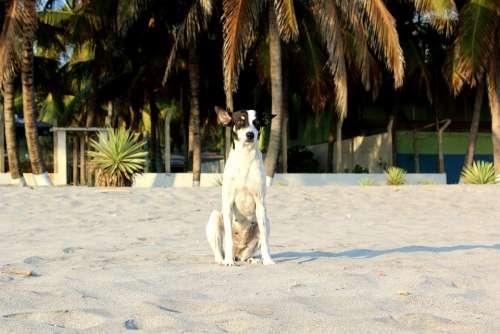 Beach Dog Palm Sand Animal Pet Canine Puppy