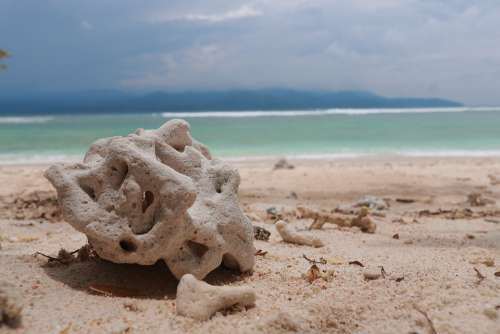 Beach Coral Nature Water Indonesian Holiday Sand