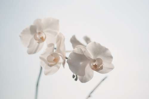 Beautiful Orchids White Bloom Blooming Blossom