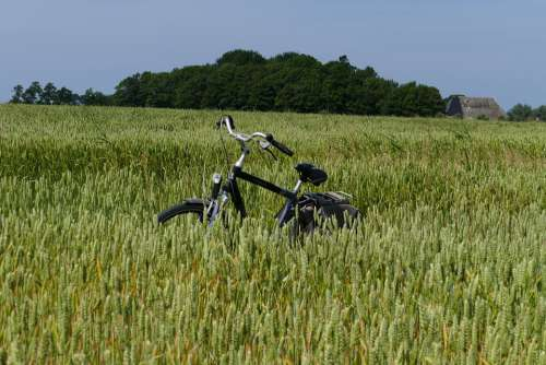 Bicycle Mens Bike Grain Country Arable Farming