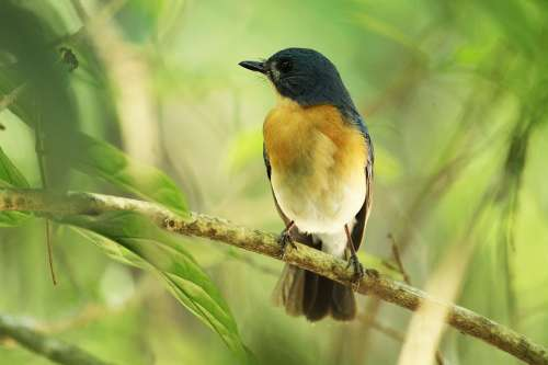 Bird Wildlife Nature Animal Outdoors Wild Feather