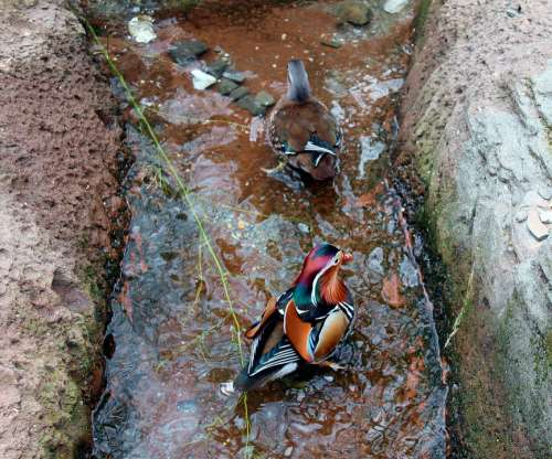 Bird Water Nature Animal Lake Stream Pond Stone